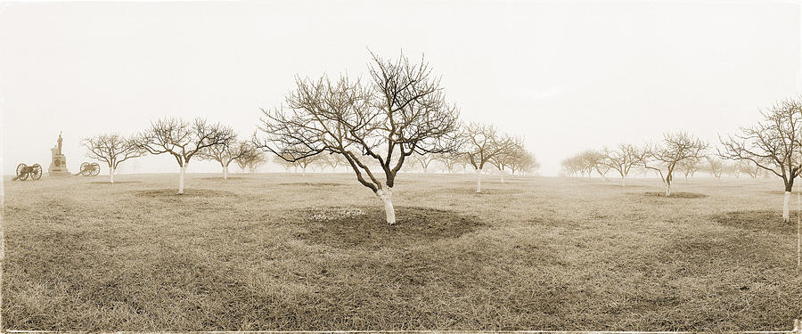 Peach Orchard Gettysburg Photograph