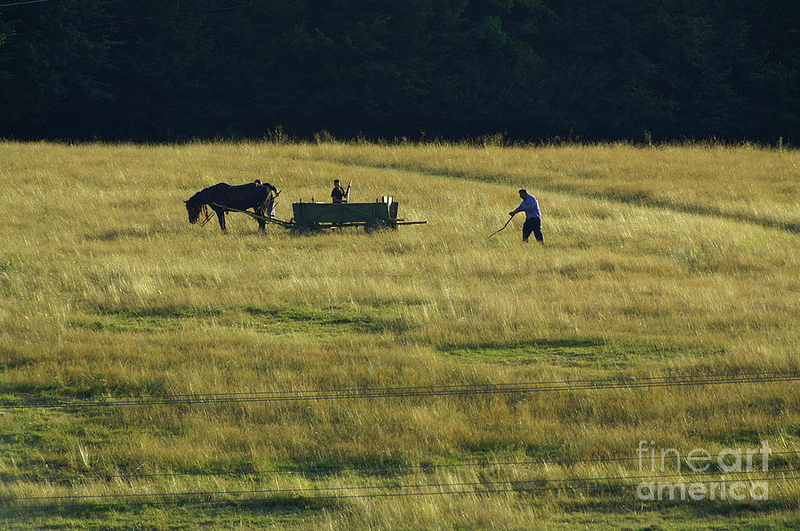 Nature Photograph - Peoples by Odon Czintos