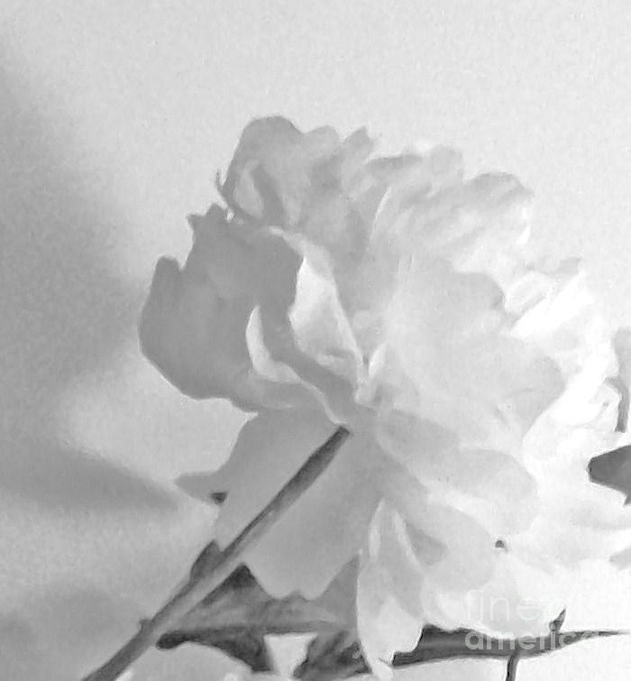 Petals Photograph