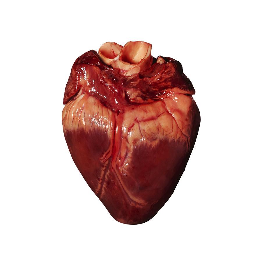 Свиное сердце отварноеы