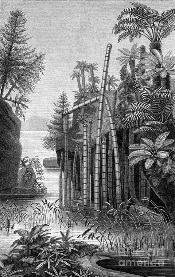 Plants Of The Triassic Period Photograph