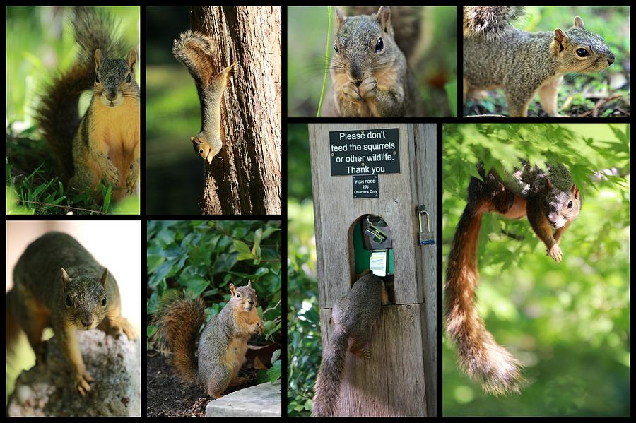Squirrel Photograph - Please Dont Feed The Squirrels by Elizabeth Hart