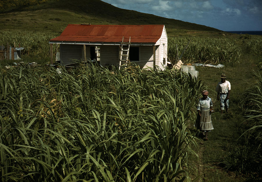 Puerto Rico. Tenant Farmers Photograph  - Puerto Rico. Tenant Farmers Fine Art Print