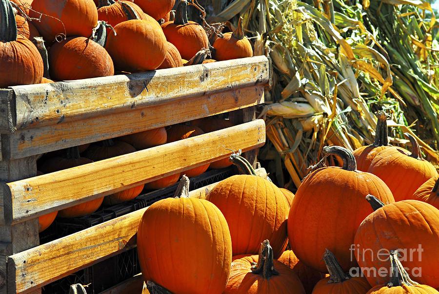 Pumpkin Photograph - Pumpkins by Elena Elisseeva