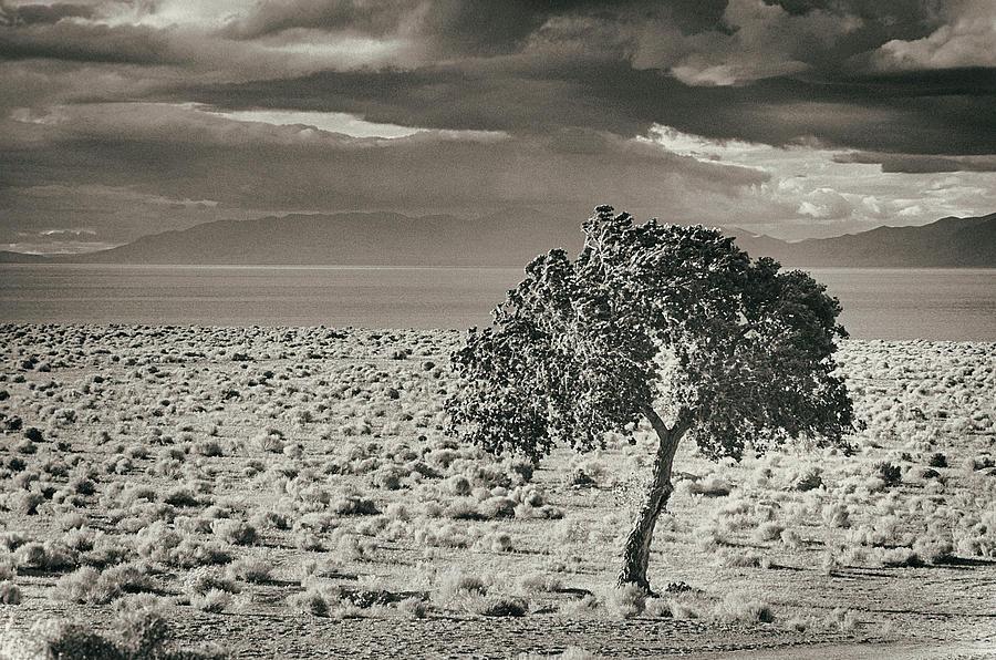 Horizontal Photograph - Pyramid Lake, Nevada, Usa by Mel Curtis