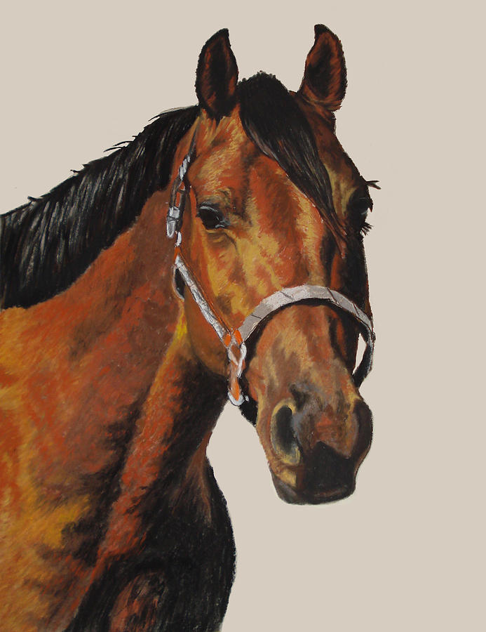 American Quarter Horse Pastel - Quarter Horse by Ann Marie Chaffin