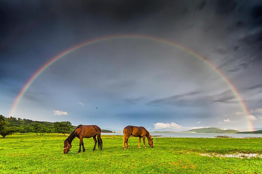 Bulgaria Photograph - Rainbow Horses by Evgeni Dinev