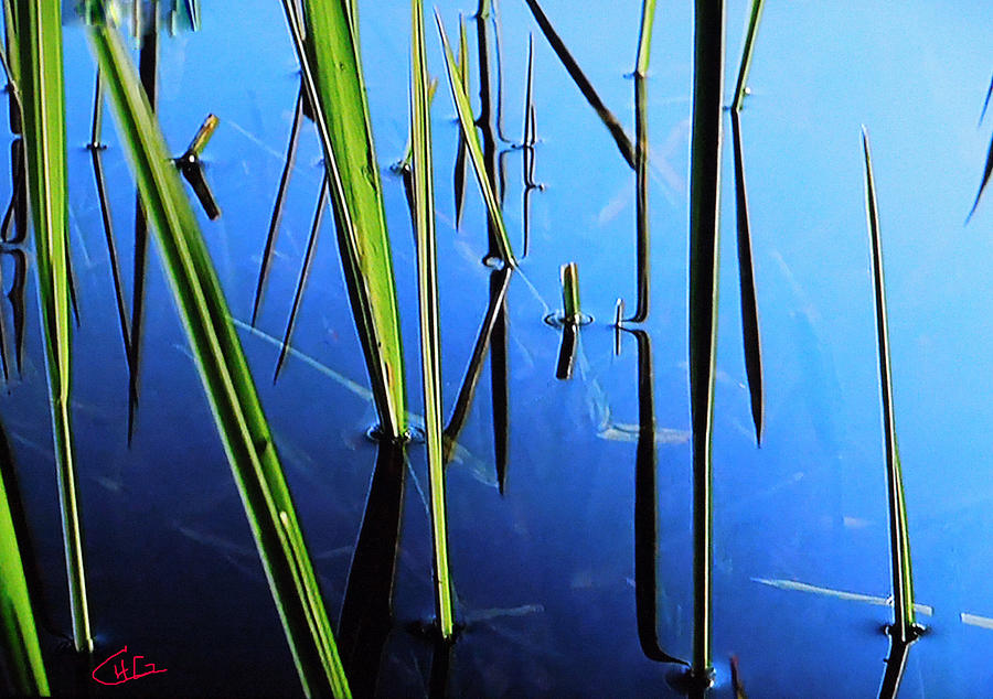 Reflections In Water Photograph  - Reflections In Water Fine Art Print