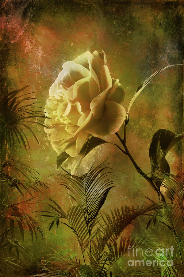 Rose Digital Art  - Rose Fine Art Print