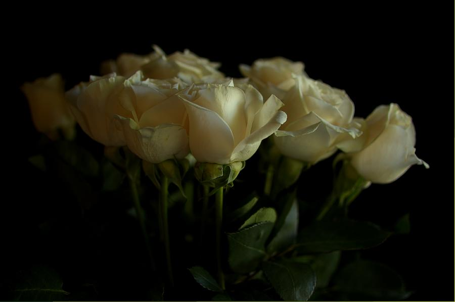 Flora Photograph - Roses by Mario Celzner