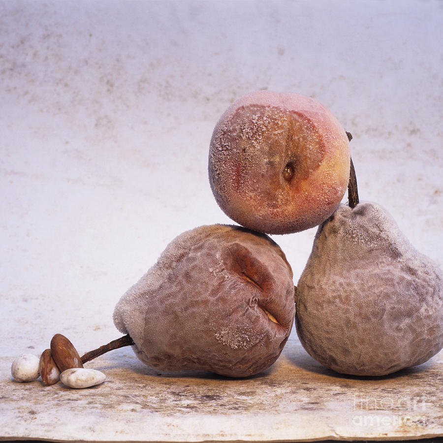 Rotten Pears And Apple. Photograph