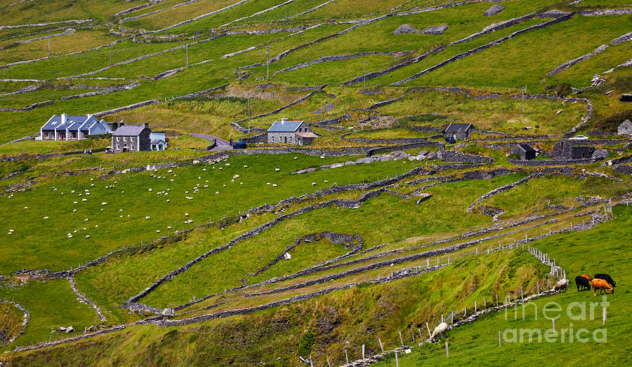 Rural Landscape On Dingle Peninsula Photograph