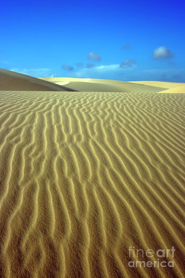 Sandy Desert Photograph