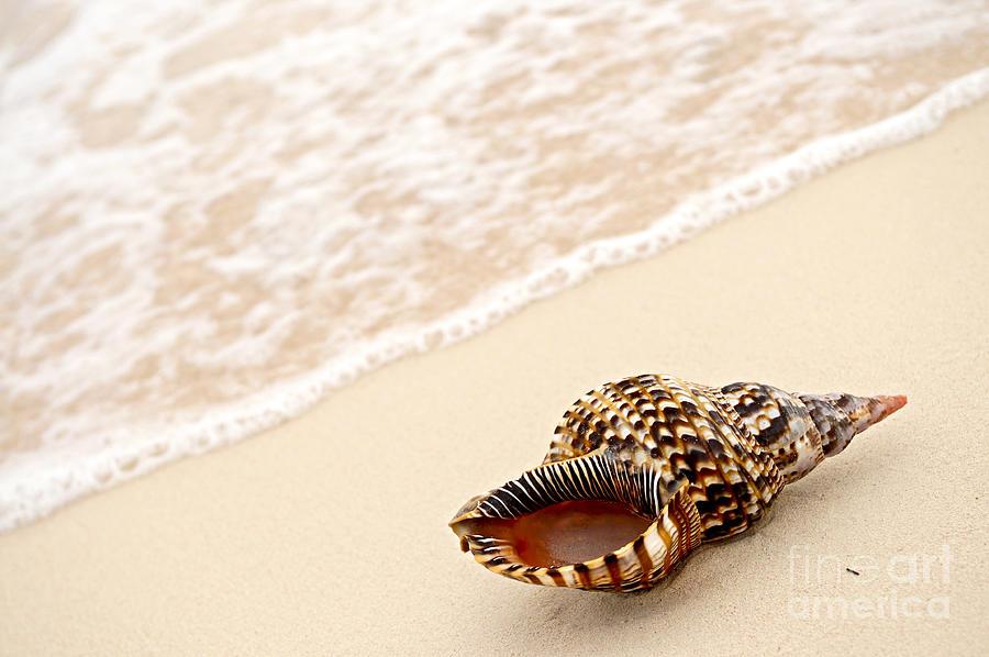 Seashell And Ocean Wave Photograph by Elena Elisseeva