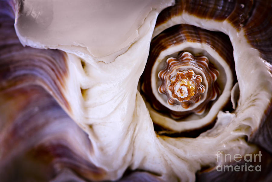 Seashell Detail Photograph  - Seashell Detail Fine Art Print