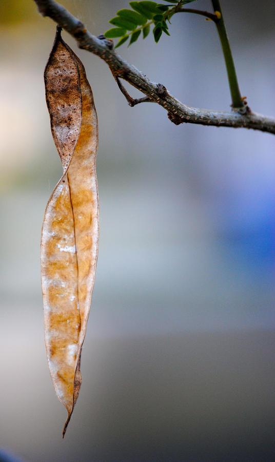 Seed Pod Photograph