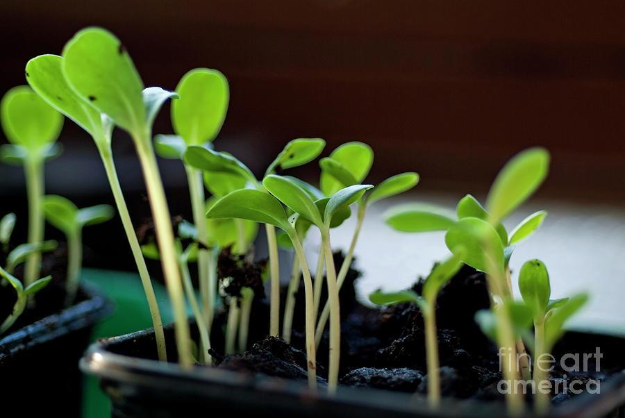 Beginnings Photograph - Seeding Shoots by Sami Sarkis