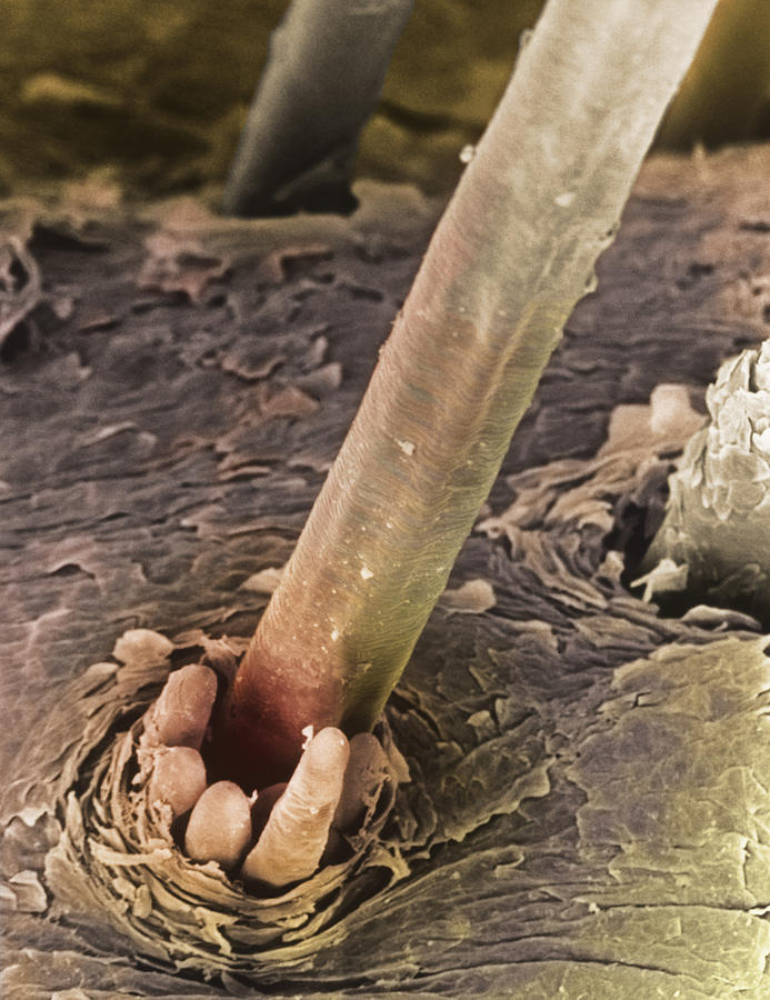 Sem Of Eyelash Hair Photograph