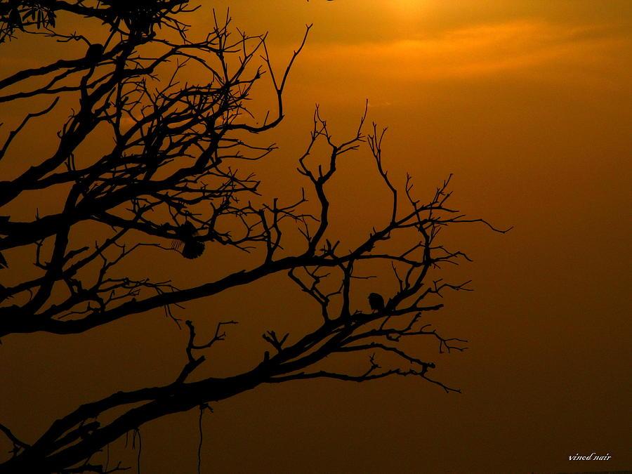 Photograph - Shapes by Vinod Nair