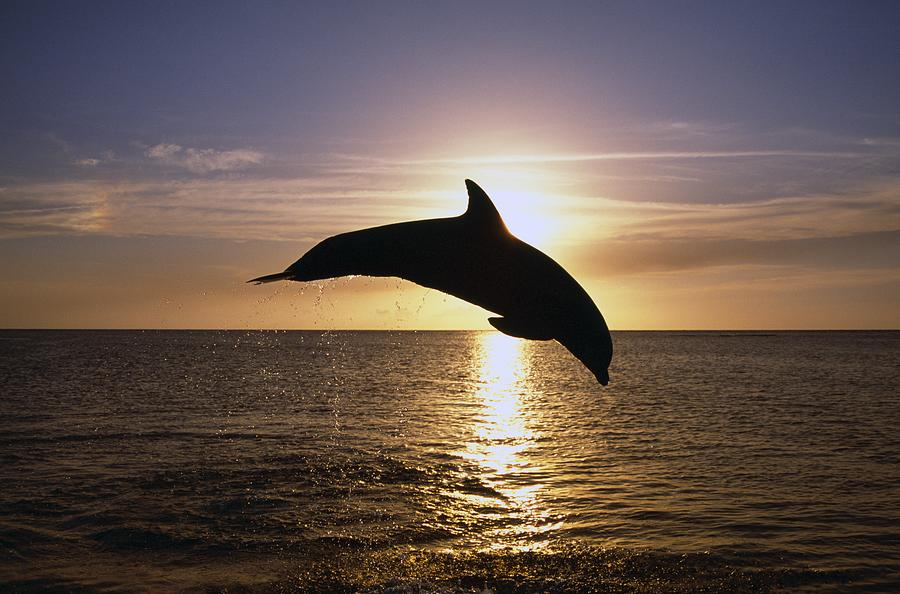 Is A Dolphin A Natural Selection