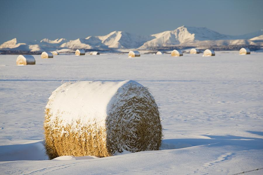 Snow-covered Hay Bales Okotoks Photograph  - Snow-covered Hay Bales Okotoks Fine Art Print