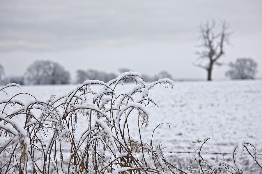 Snow Covered Trees And Field Photograph