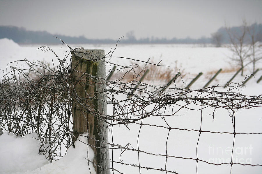 Snow Fence  Photograph