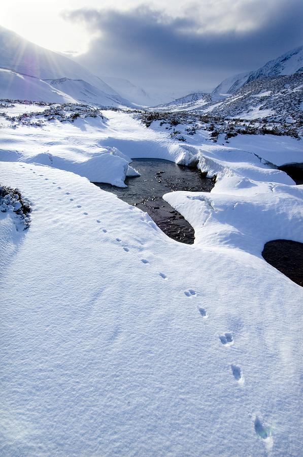 Snowy Landscape, Scotland Photograph