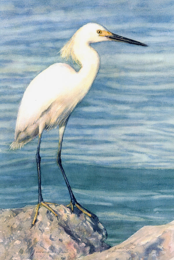 Snowy white egret by shawn mcloughlin for White heron paint