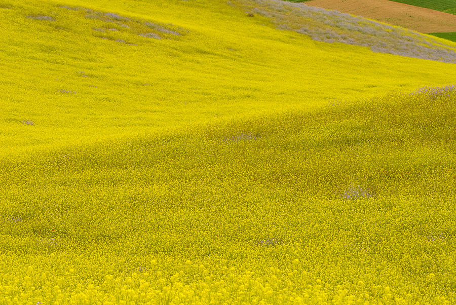 Spring In Spain Photograph