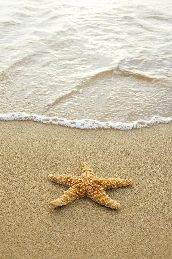 How To Draw A Starfish On The Beach