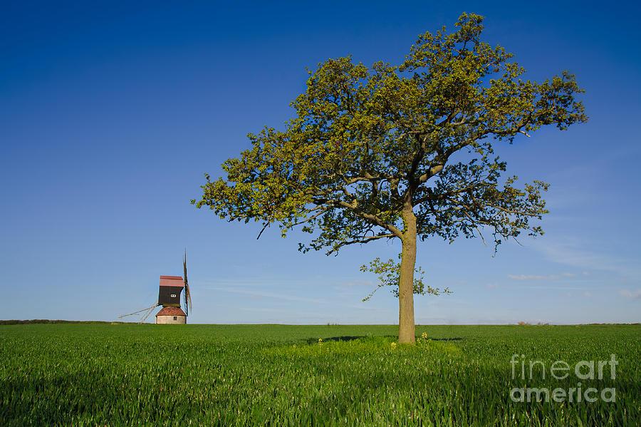 Stevington Windmill Photograph