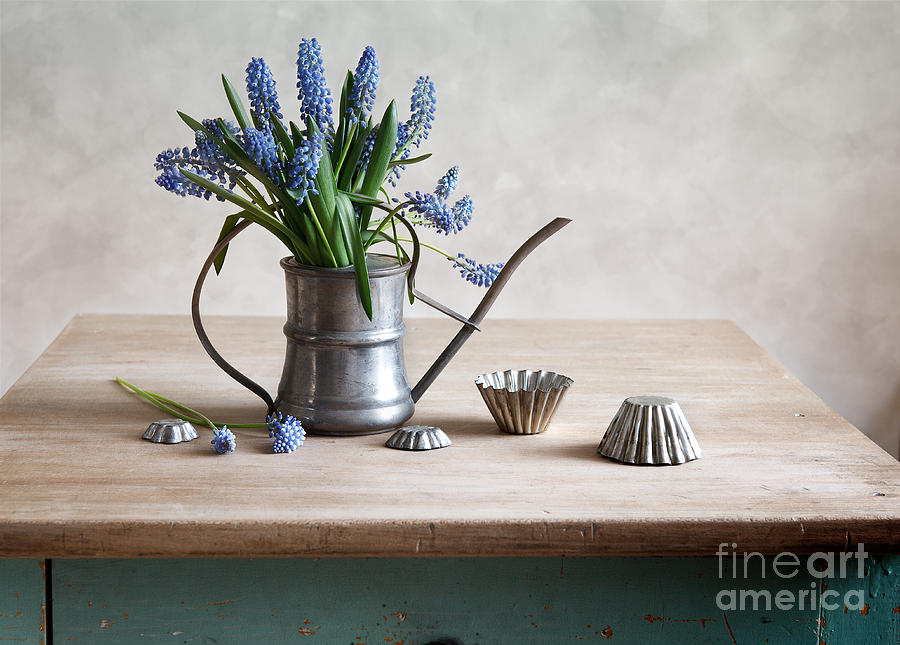Still Life With Grape Hyacinths Photograph  - Still Life With Grape Hyacinths Fine Art Print