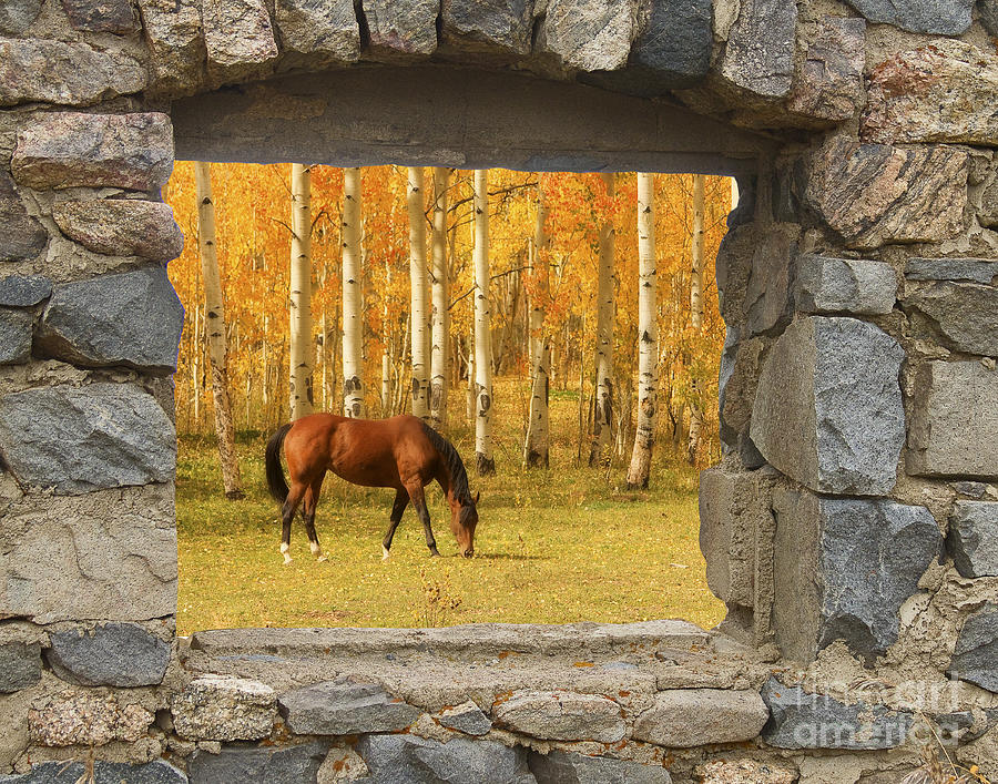 Stone Window View And Beautiful Horse Photograph  - Stone Window View And Beautiful Horse Fine Art Print