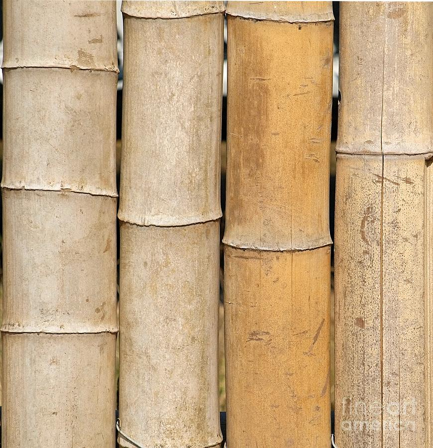 Straight Bamboo Poles Photograph