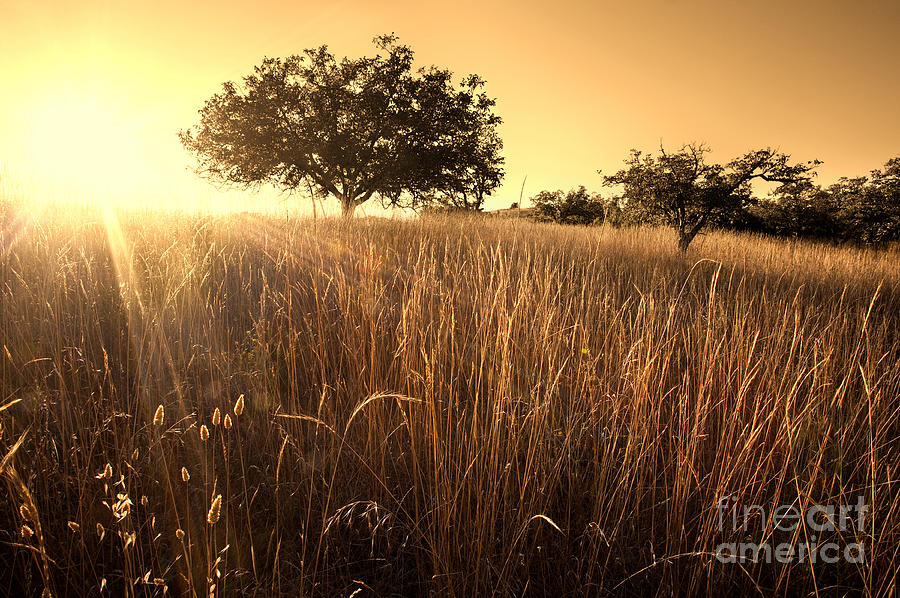 Sun-kissed California Meadow Photograph