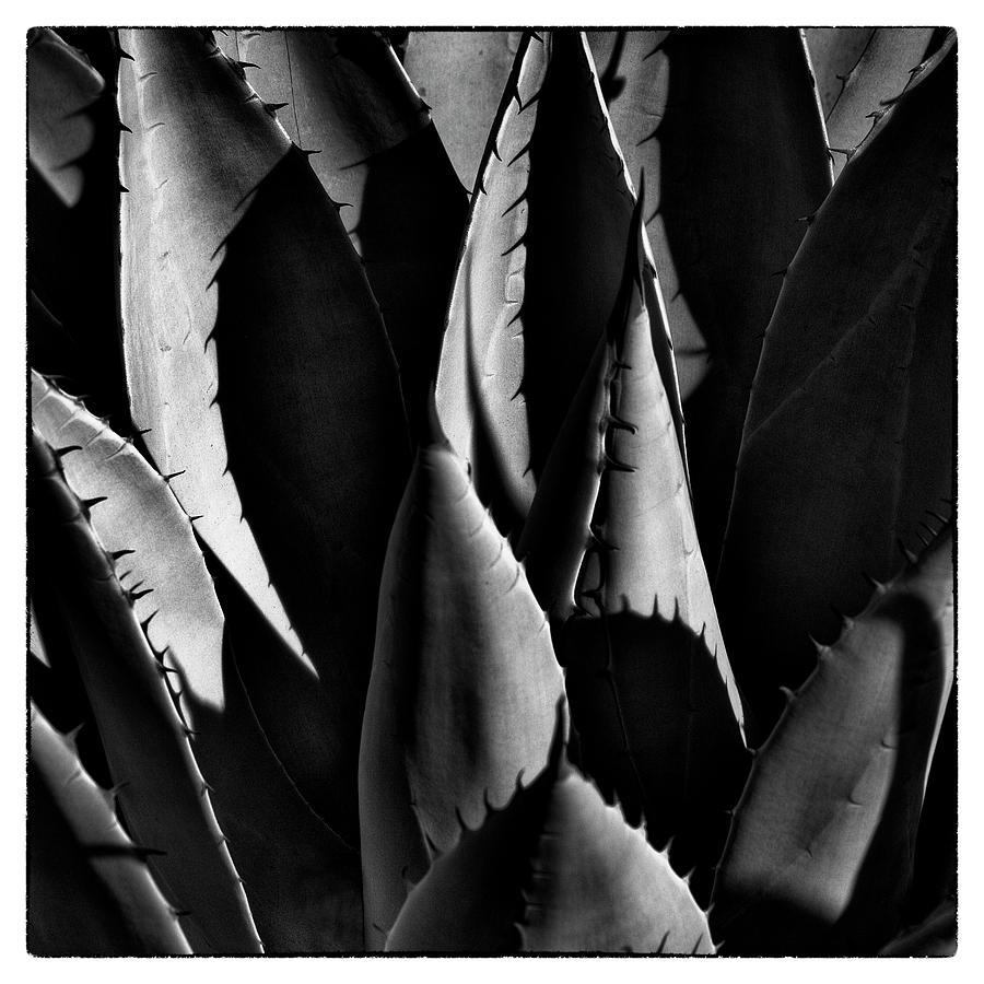 Sunlit Cactus Photograph