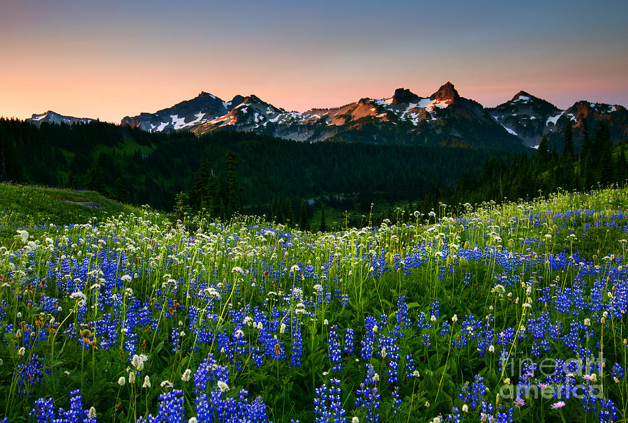 Tatoosh Dawn Photograph
