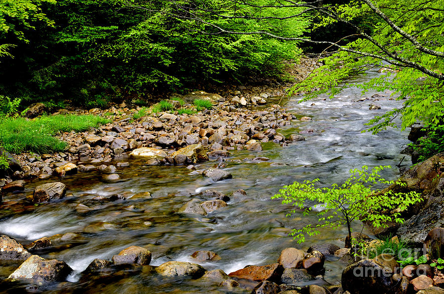 Tea Creek Monongahela National Forest Photograph