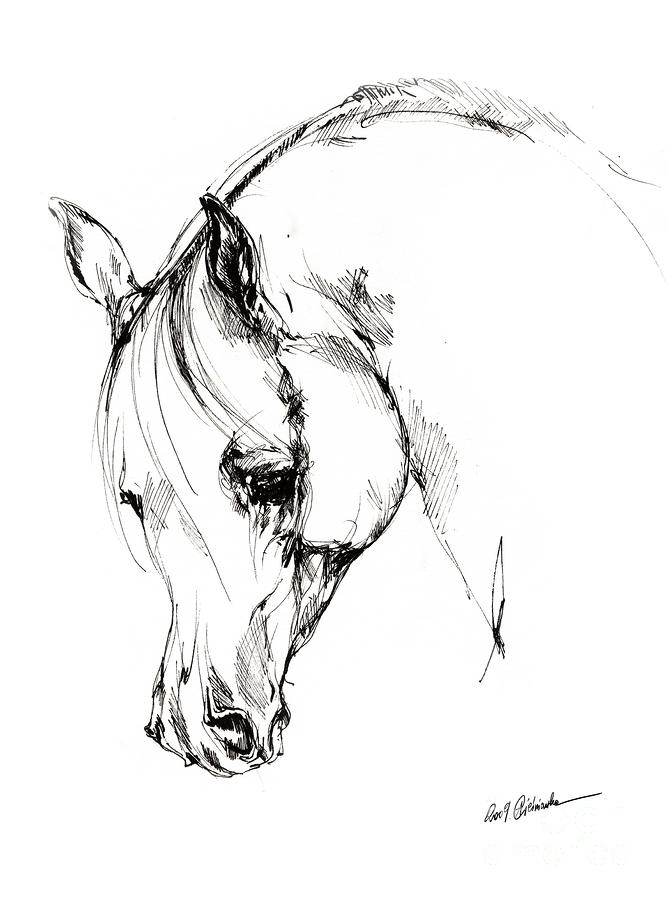 The Arabian Horse Sketch Drawing  - The Arabian Horse Sketch Fine Art Print