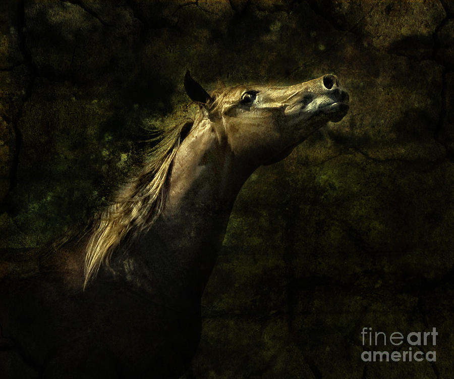 The Arabian Photograph  - The Arabian Fine Art Print