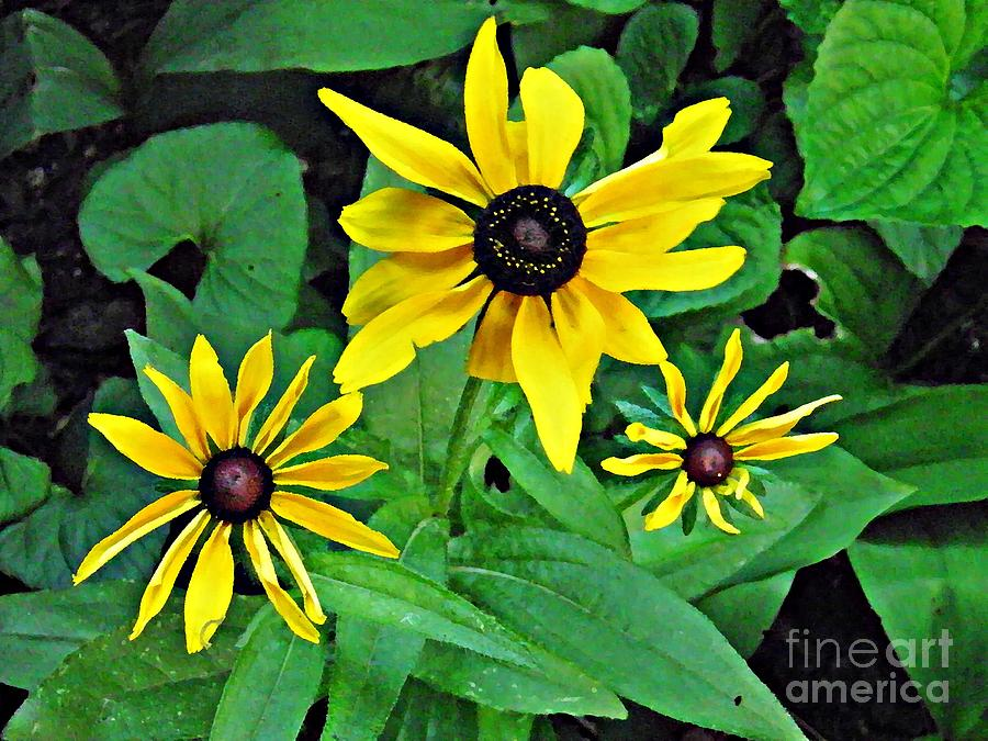 Three Susans Photograph