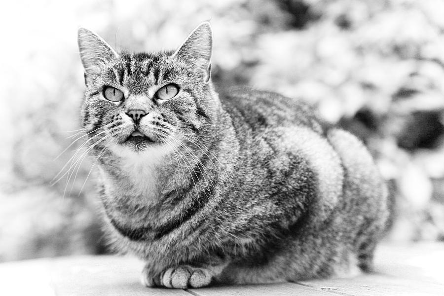 Tomcat Photograph