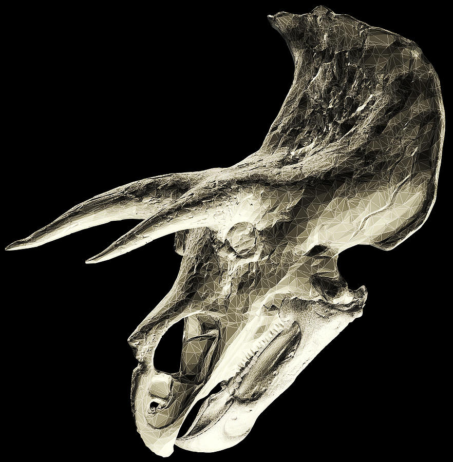 Fossilized Photograph - Triceratops Dinosaur Skull by Smithsonian Institute