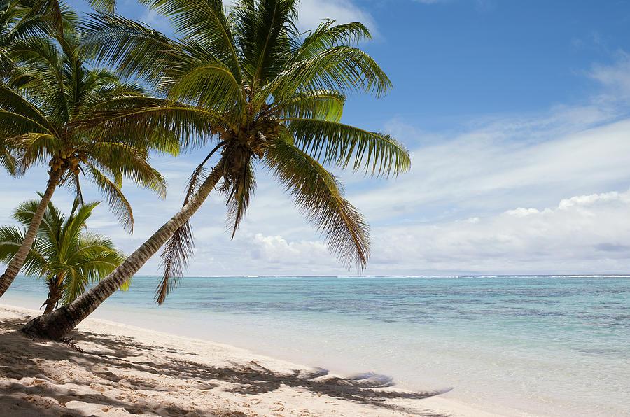 Tropical Shipping Palm Beach Fl
