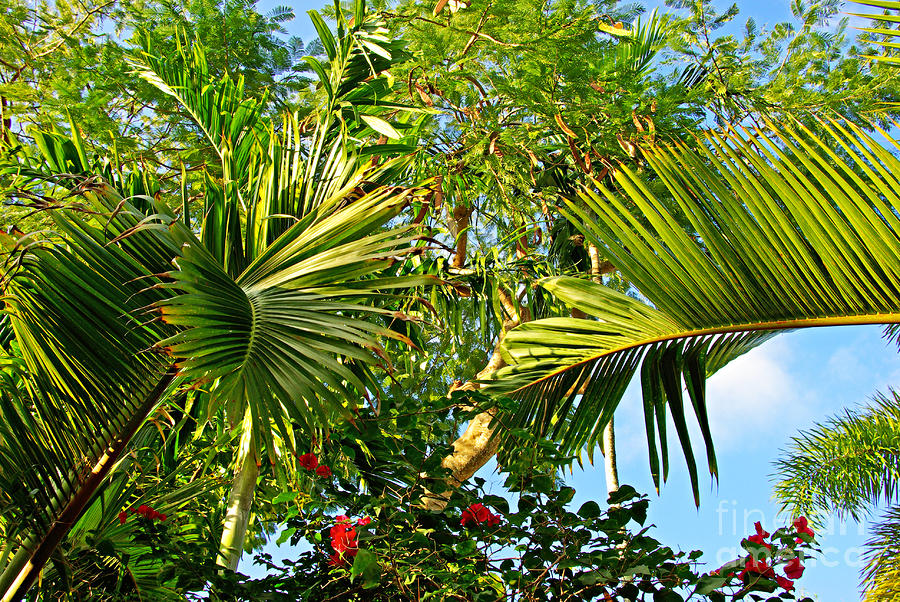 Tropical Plants Photograph