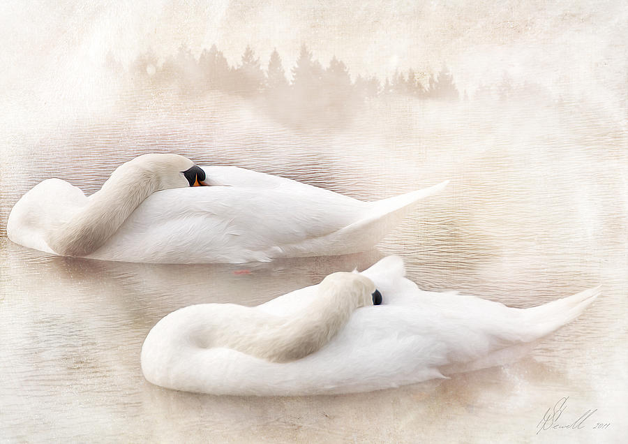 Two Swans Photograph  - Two Swans Fine Art Print