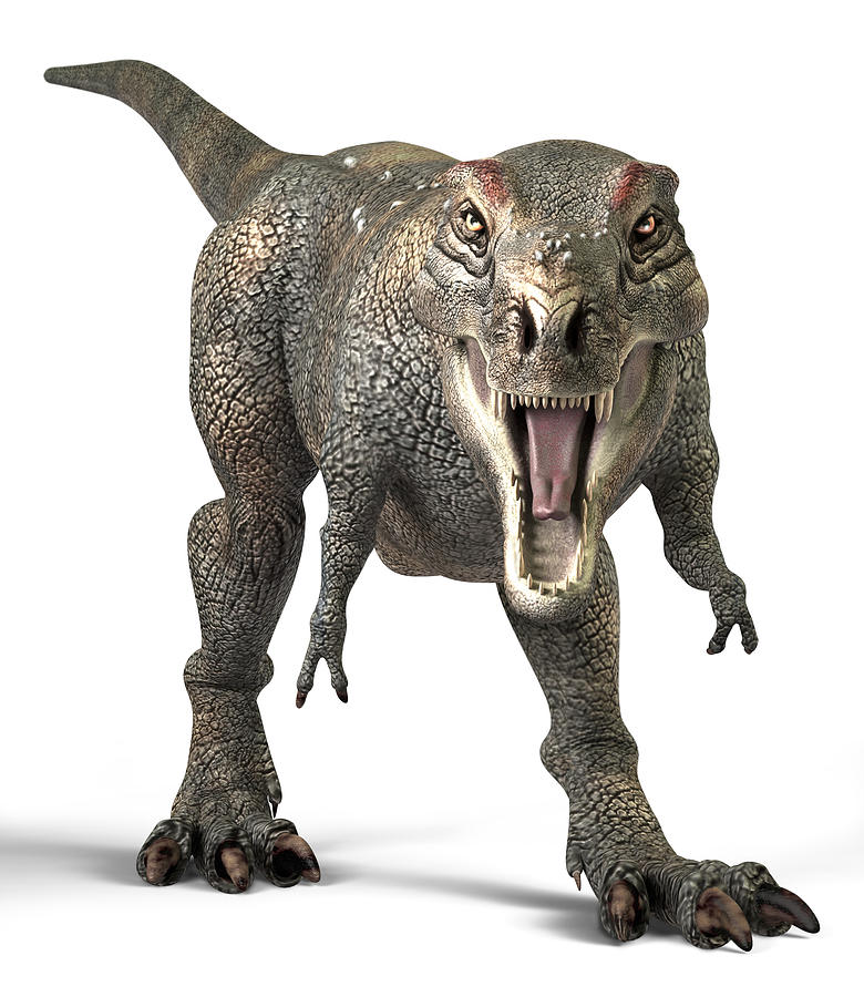 Tyrannosaurus Rex Photograph - Tyrannosaurus Rex Dinosaur by Roger Harris