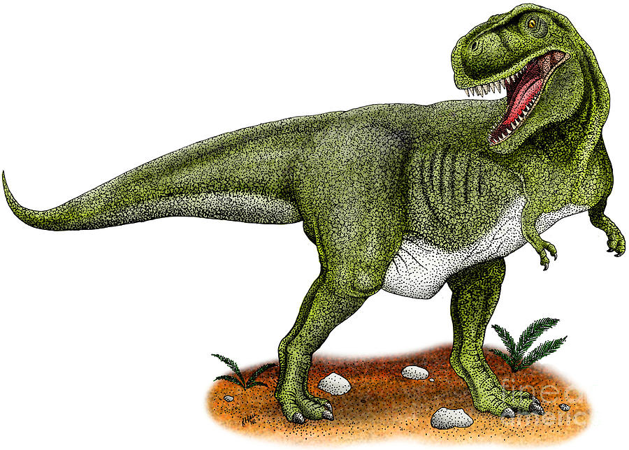 Dinosaur Drawing - Tyrannosaurus Rex by Roger Hall and Photo Researchers