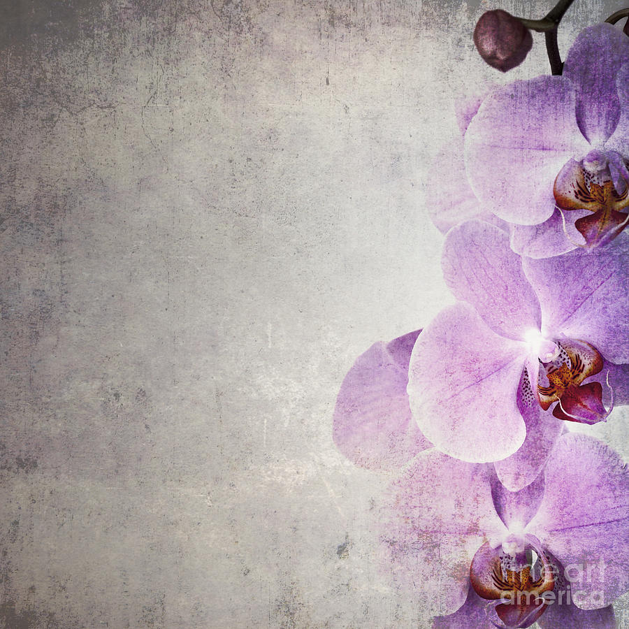 Bud Photograph - Vintage Orchids by Jane Rix
